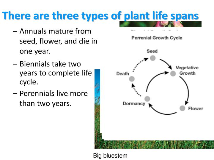 There are three types of plant life spans