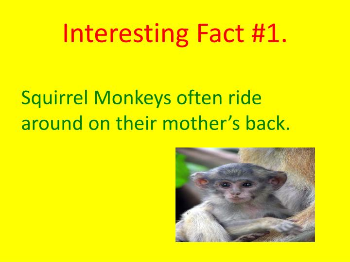 Interesting Fact #1.