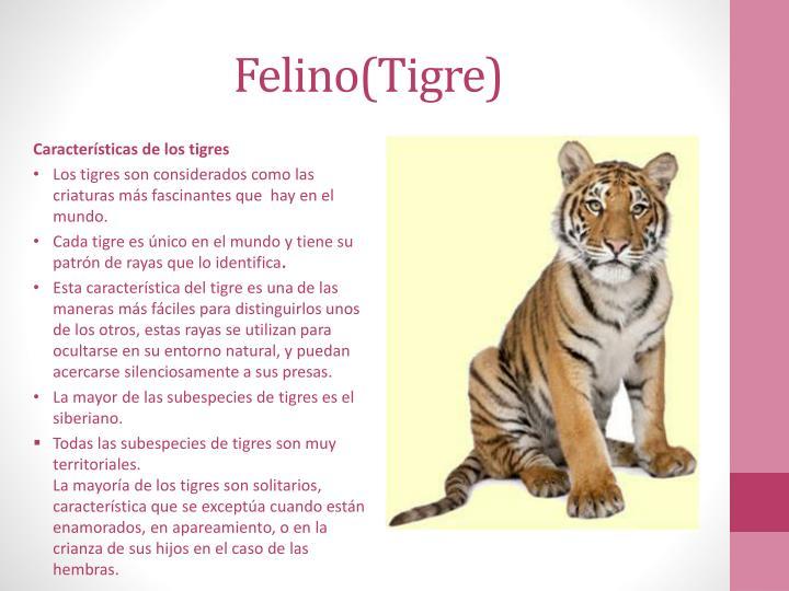 Felino(Tigre)