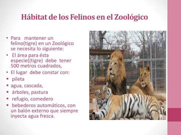 Hábitat de los Felinos en el Zoológico