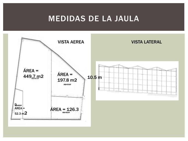MEDIDAS DE LA JAULA