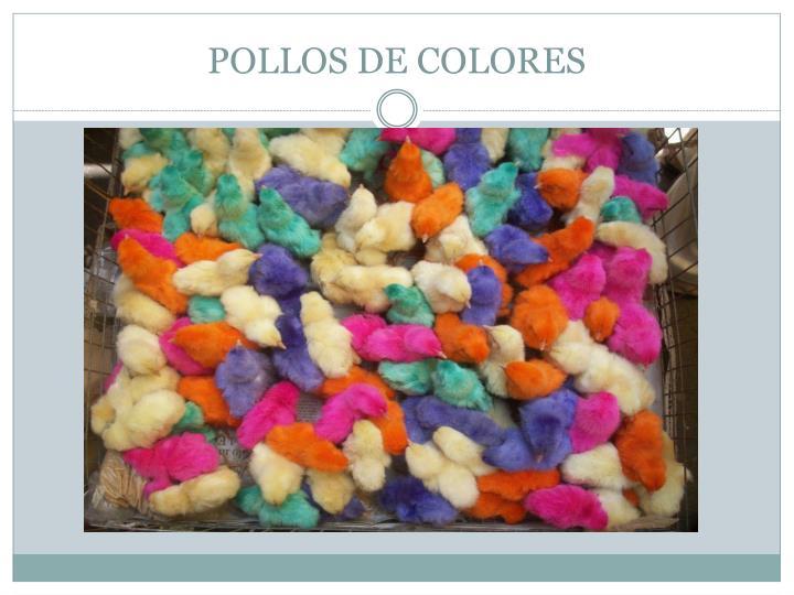 POLLOS DE COLORES
