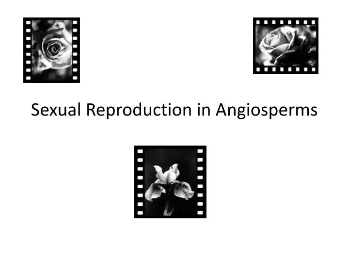 Sexual Reproduction in Angiosperms