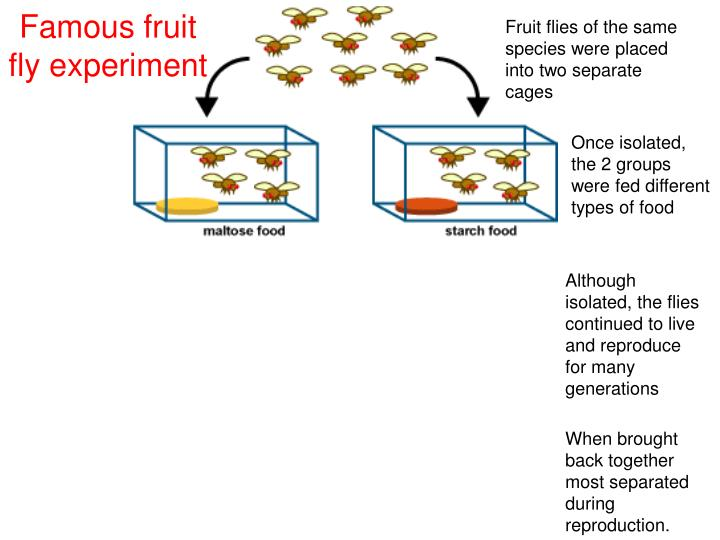 Fruit flies of the same species were placed into two separate cages