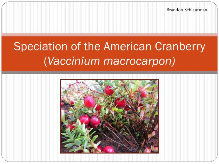 Speciation of the american cranberry vaccinium macrocarpon