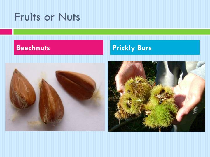 Fruits or Nuts