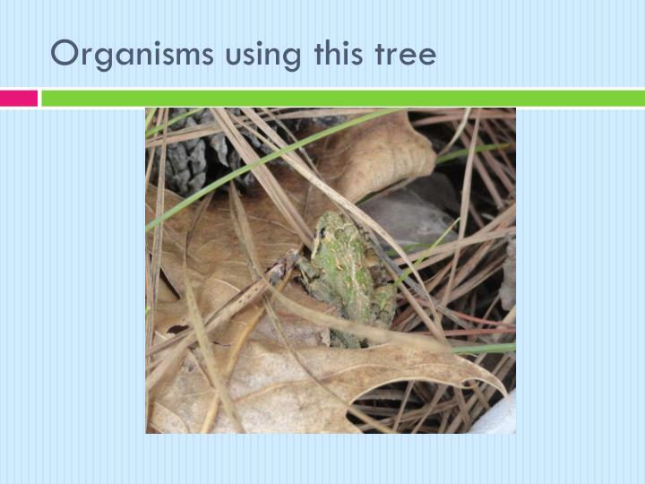 Organisms using this tree