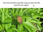 then the painted lady flies away to start the life cycle all over again