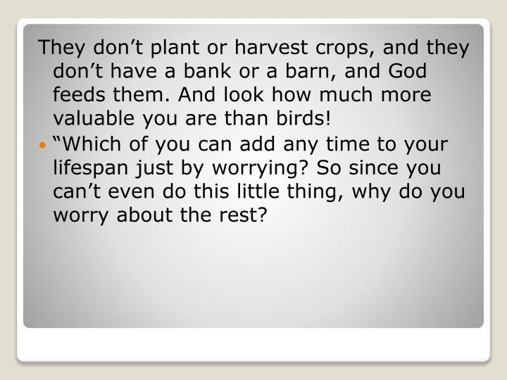 They don't plant or harvest crops, and they don't have a bank or a barn, and God