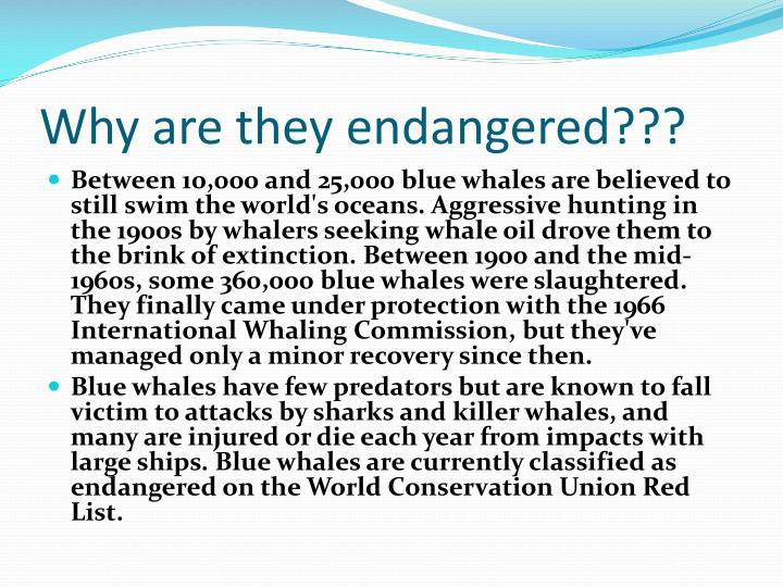 Why are they endangered???