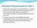 multiple polyadenylation sites