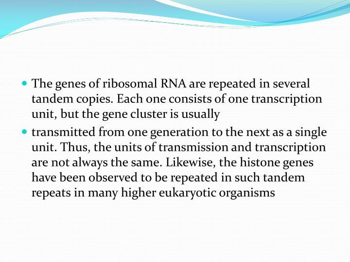 The genes of ribosomal RNA are repeated in several tandem copies. Each one consists of one transcription unit, but the gene cluster is usually