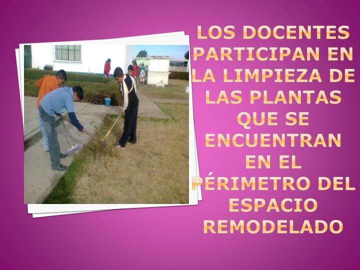 LOS DOCENTES PARTICIPAN EN LA LIMPIEZA DE LAS PLANTAS QUE SE ENCUENTRAN EN EL PÉRIMETRO DEL ESPACIO REMODELADO