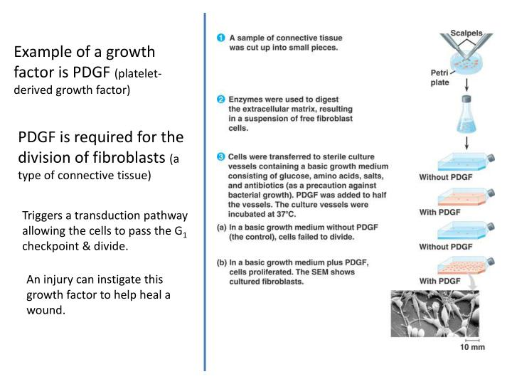 Example of a growth factor is PDGF