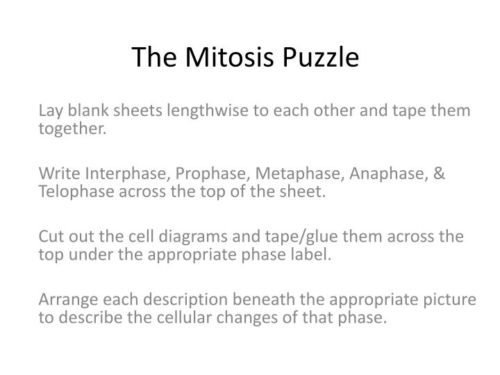The Mitosis Puzzle