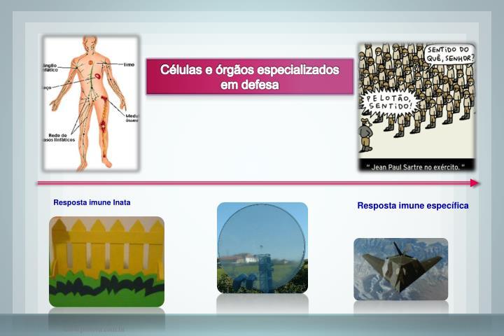 Células e órgãos especializados em defesa