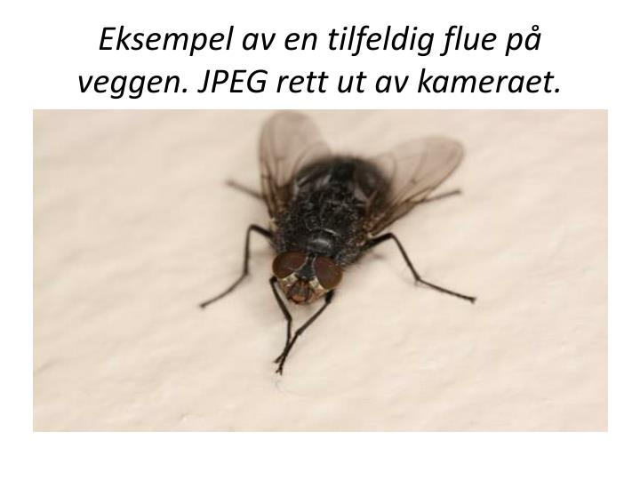 Eksempel av en tilfeldig flue på veggen. JPEG rett ut av kameraet.