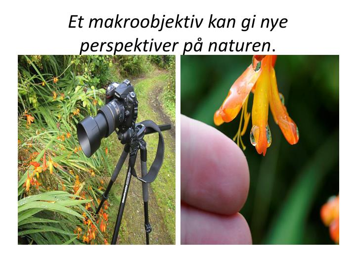 Et makroobjektiv kan gi nye perspektiver på naturen