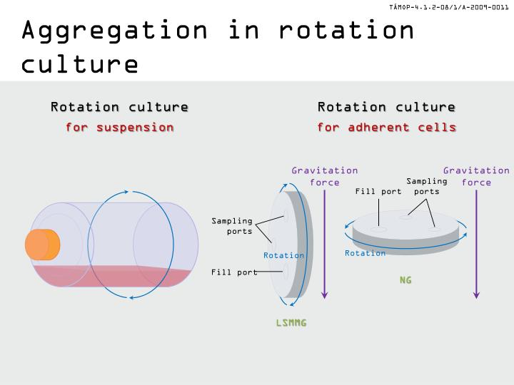 Aggregation in rotation culture