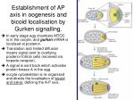 establishment of ap axis in oogenesis and bicoid localisation by gurken signalling