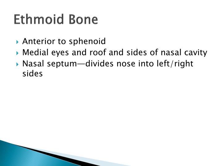 Ethmoid