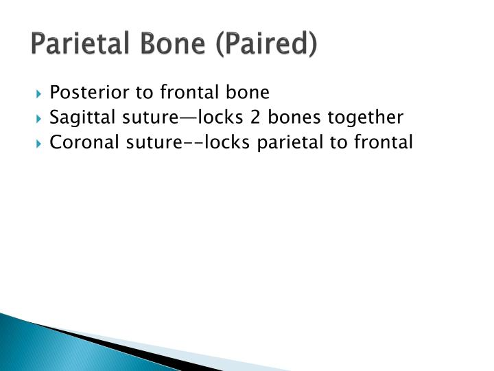 Parietal Bone (Paired)