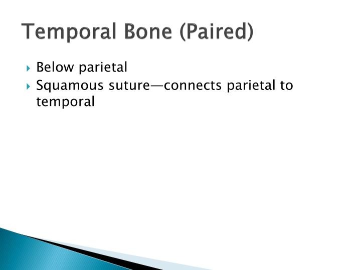 Temporal Bone (Paired)