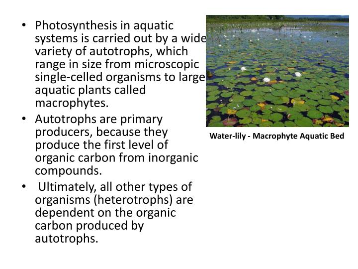 Photosynthesis in aquatic systems is carried out by a wide variety of