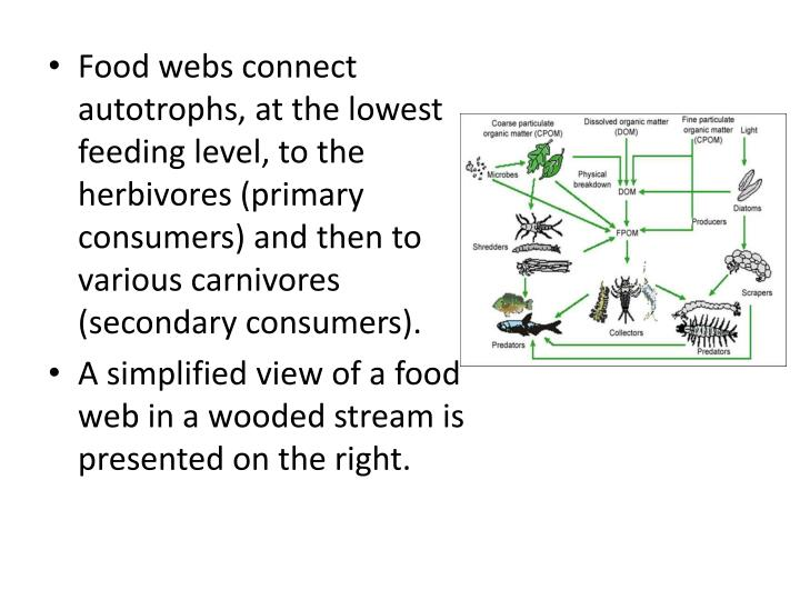 Food webs connect