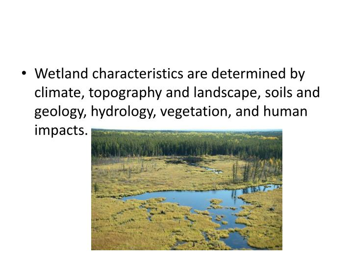 Wetland characteristics are determined by climate, topography and landscape, soils and geology, hydrology, vegetation, and human impacts.