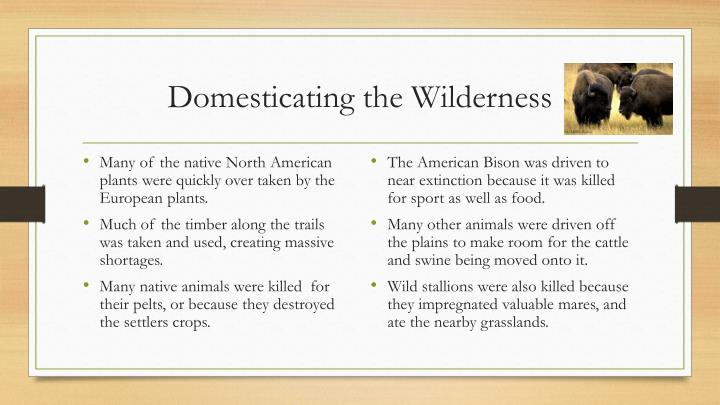Domesticating the Wilderness
