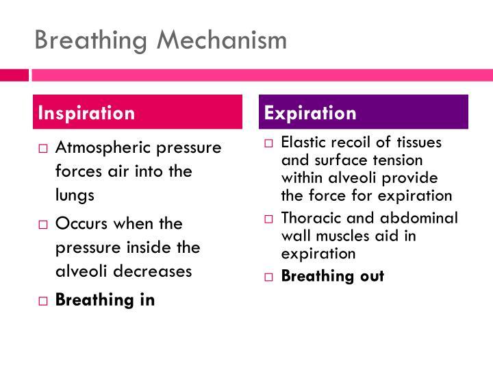 Breathing Mechanism