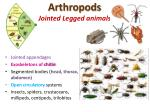 arthropods jointed legged animals