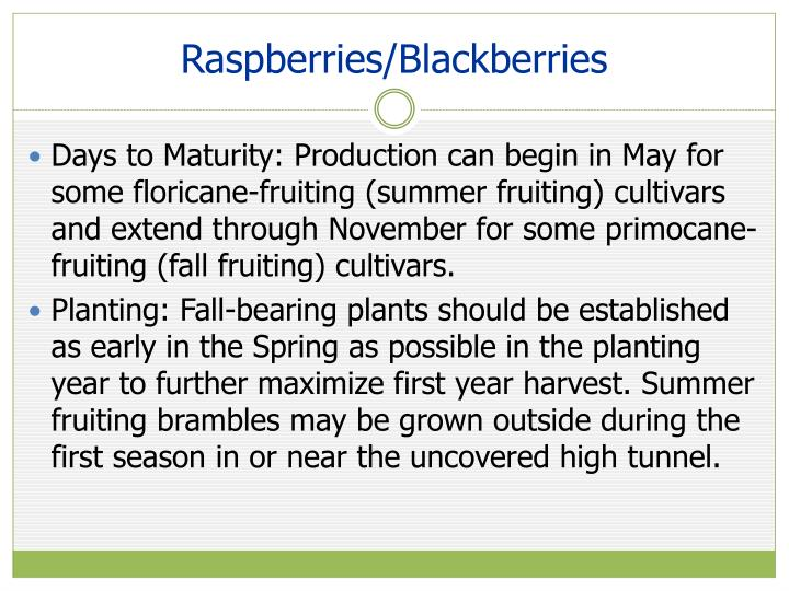 Raspberries/Blackberries