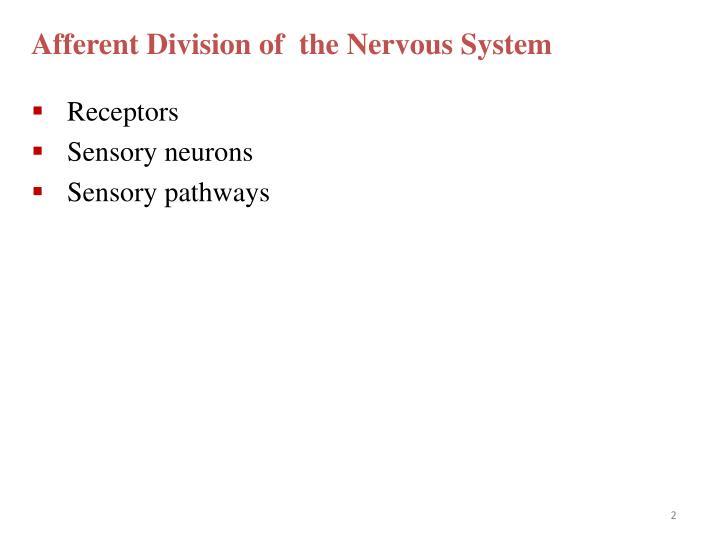 Afferent Division of