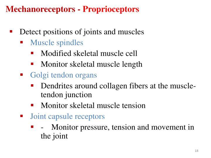 Mechanoreceptors -