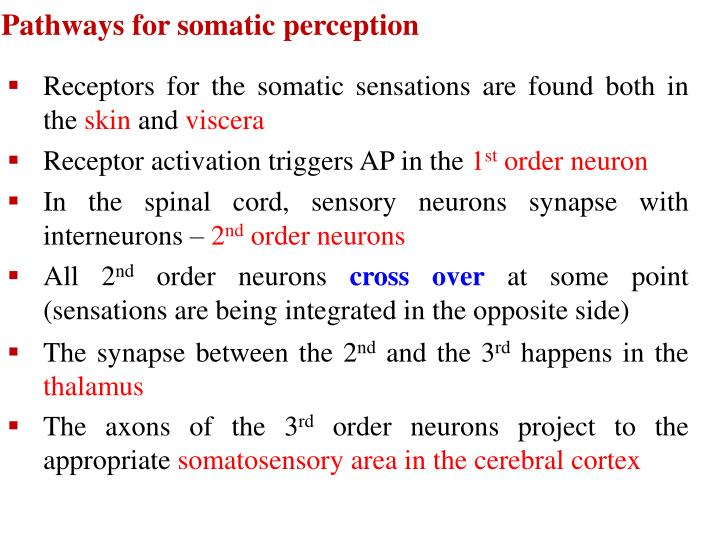 Pathways for somatic perception