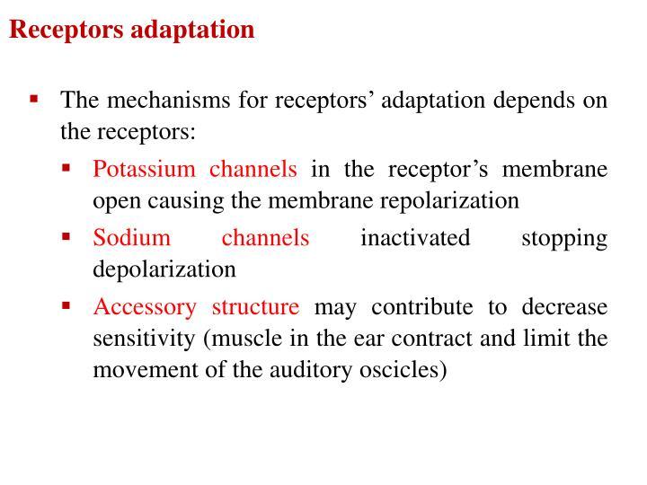 Receptors adaptation