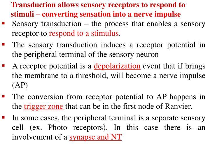 Transduction allows sensory receptors to respond to stimuli –