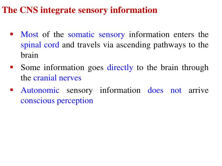 The CNS integrate sensory information