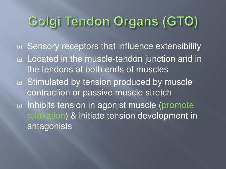 Golgi Tendon Organs (GTO)