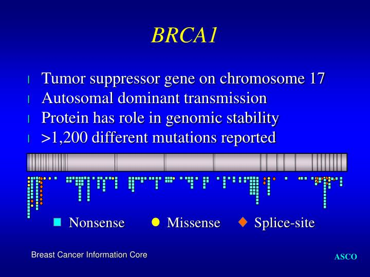 Tumor suppressor gene on chromosome 17