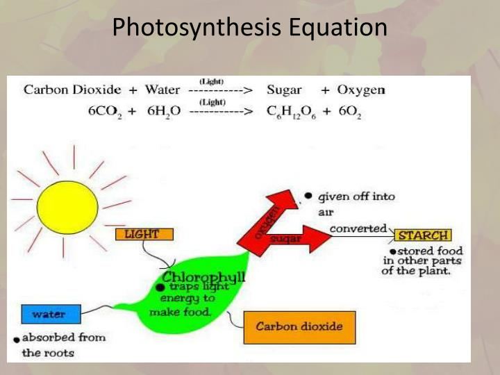 The Role Of Light In Photosynthesis Biology Essay Homework Sample  The Role Of Light In Photosynthesis Biology Essay