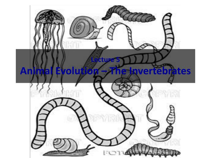 Lecture 5 animal evolution the invertebrates