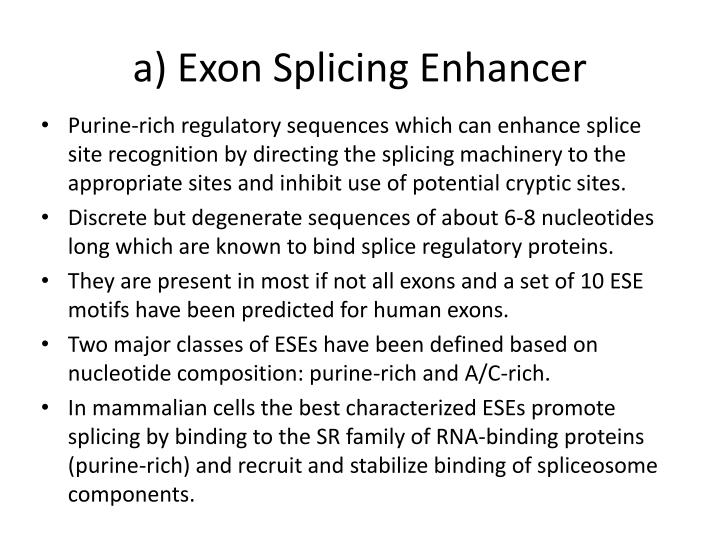 a) Exon Splicing Enhancer