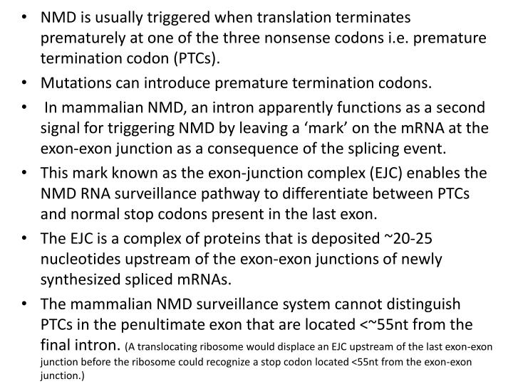NMD is usually triggered when translation terminates prematurely at one of the three nonsense codons i.e. premature termination codon (PTCs).