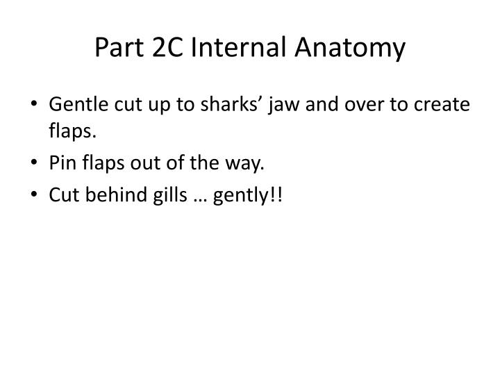 Part 2C Internal Anatomy