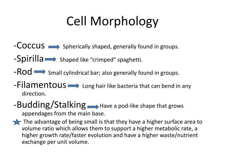 Cell Morphology