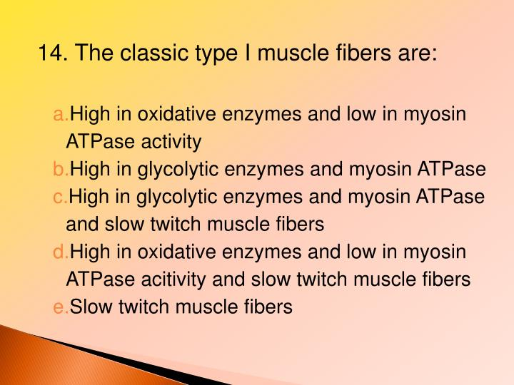 14. The classic type I muscle fibers are:
