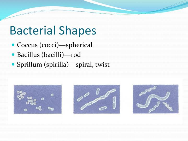 Bacterial Shapes